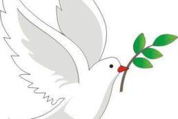 Güvercin Görselleri – Güvercin kalıpları